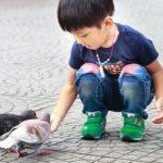 Ребенок и голубь