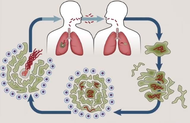 Передача микобактерий воздушно капельным путем