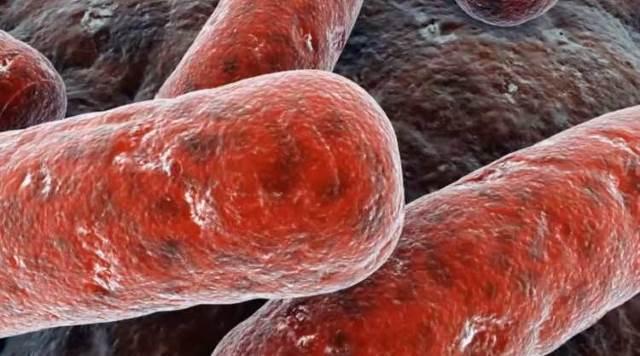 Микобактерии остаются живыми в кипящей воде в течении пяти минут