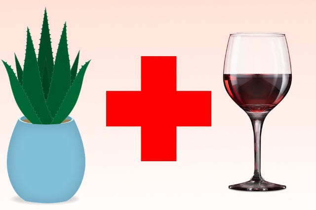 Алоэ можно приготовить с вином