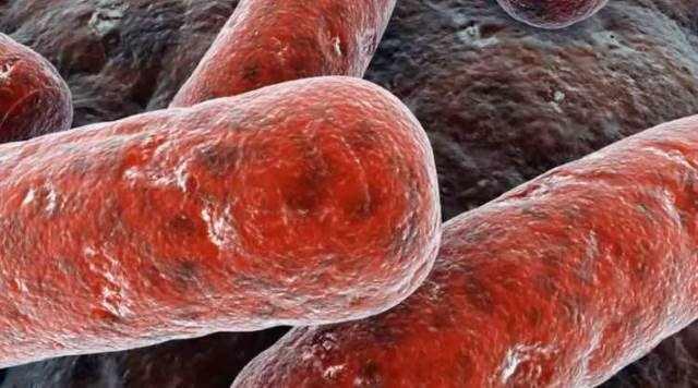 Микобактерии туберкулеза опасны