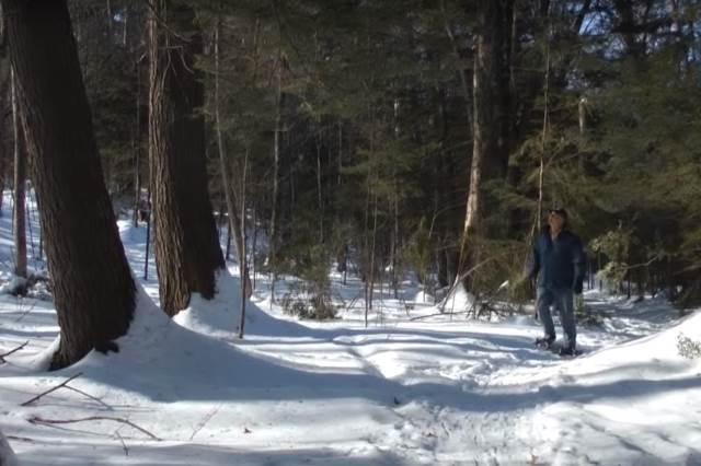 Сосновый лес положительно влияет на органы дыхания