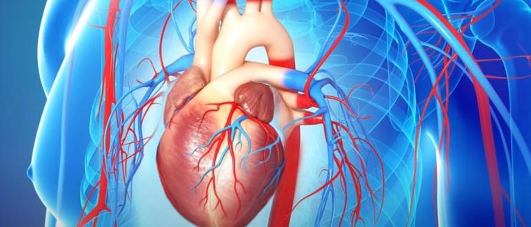 Заболевание может распространяться через кровеносную систему