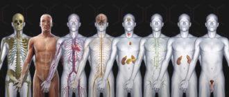 Инфекция может поразить любой орган или систему человека