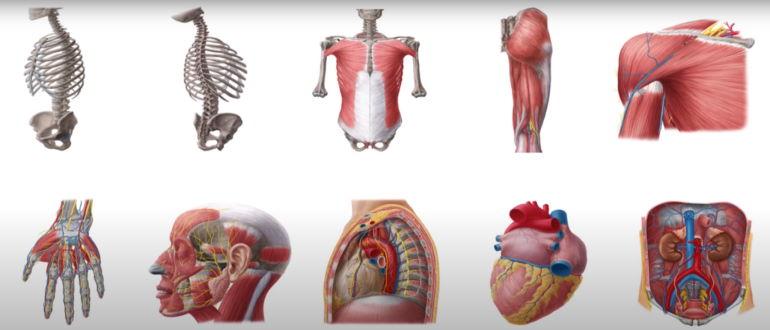 Все системы и части тела могут быть инфицированы микобактериями